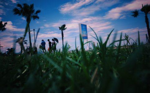 芝生から見上げる